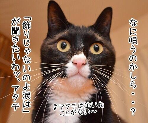 中森明菜さん紅白出場 猫の写真で4コマ漫画 2コマ目ッ