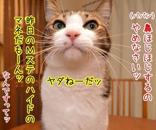ラルクのハイドも鼻ほじだもの 猫の写真で4コマ漫画 2コマ目ッ