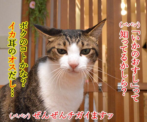 「いかのおすし」って知ってる? 猫の写真で4コマ漫画 1コマ目ッ