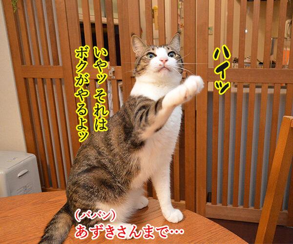 どうぞどうぞ 其の一 猫の写真で4コマ漫画 2コマ目ッ
