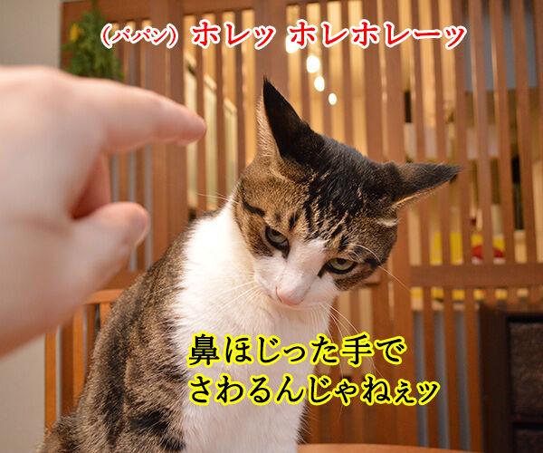 鼻をほじっちゃダメなのよッ 猫の写真で4コマ漫画 1コマ目ッ