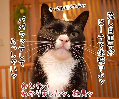 パパラッチ 猫の写真で4コマ漫画 1コマ目ッ
