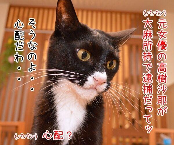 元女優・高樹沙耶が大麻所持の疑いで逮捕ですってッ 猫の写真で4コマ漫画 1コマ目ッ