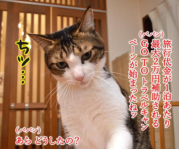GO TO トラベルキャンペーンが始まったのよッ 猫の写真で4コマ漫画 1コマ目ッ