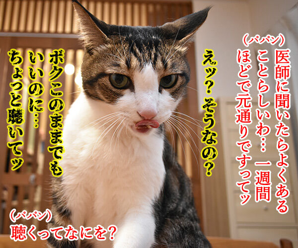 スケーリング(歯石除去)したら声がかすれちゃったのよッ 猫の写真で4コマ漫画 3コマ目ッ