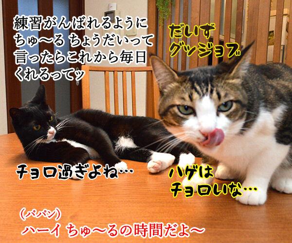 練習中なのよッ 猫の写真で4コマ漫画 4コマ目ッ