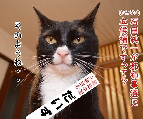 石田純一氏、東京都知事選に出馬? 猫の写真で4コマ漫画 1コマ目ッ