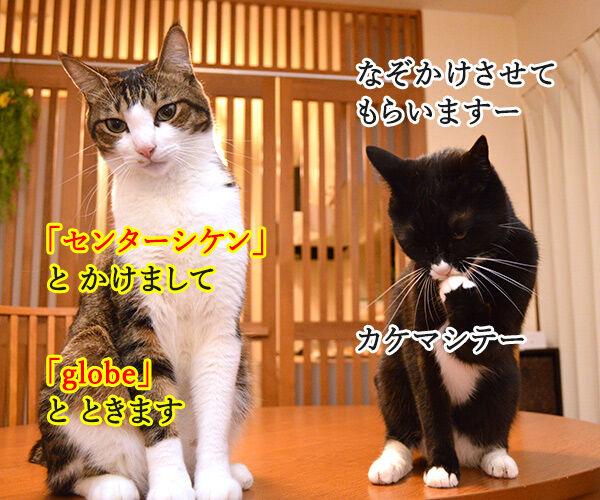 夫婦漫才 ミカとジョージ 其の五 猫の写真で4コマ漫画 1コマ目ッ