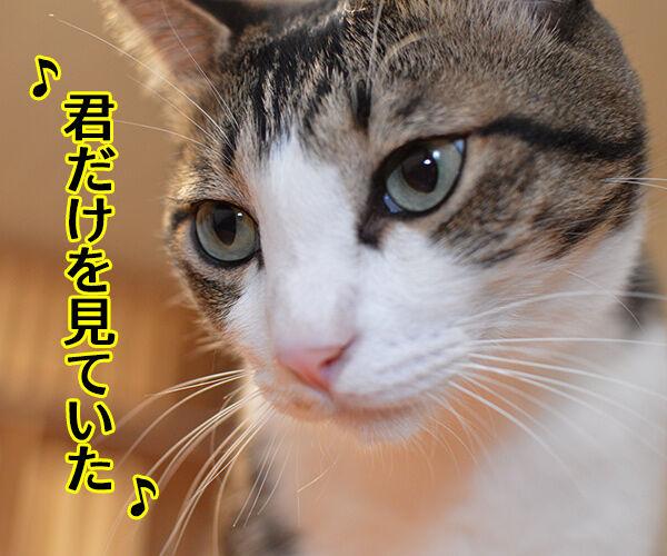 君だけを見ていた 猫の写真で4コマ漫画 1コマ目ッ