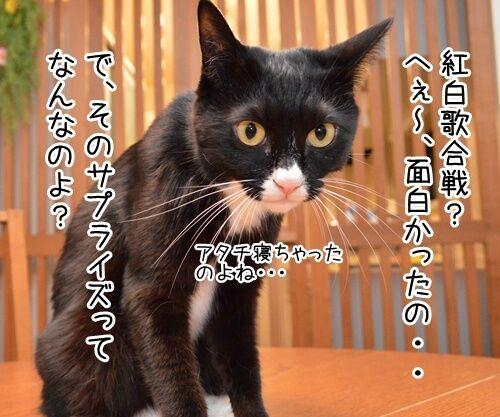 第66回NHK紅白歌合戦は紅組が勝利 猫の写真で4コマ漫画 2コマ目ッ