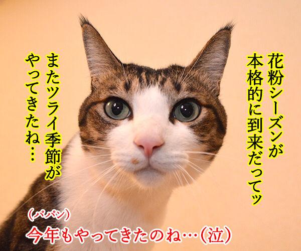 本格的な花粉シーズン到来!! 猫の写真で4コマ漫画 1コマ目ッ