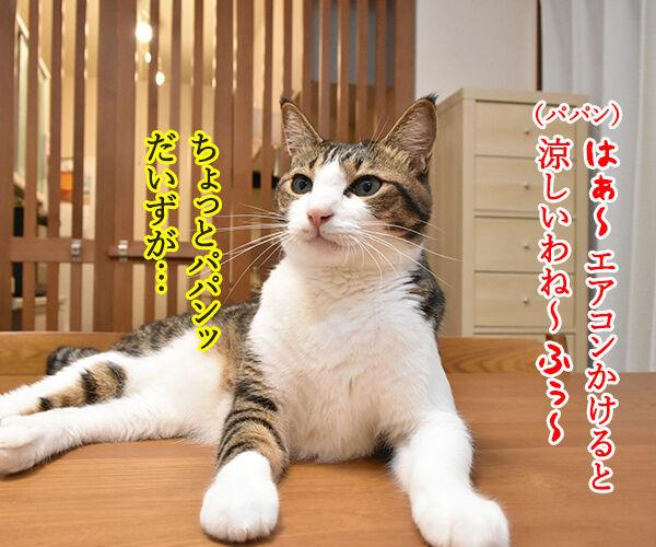 これって暑いときの猫さんあるあるかしら? 猫の写真で4コマ漫画 3コマ目ッ