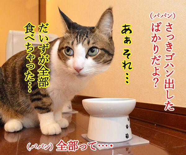 とにかく明るいあずき 猫の写真で4コマ漫画 2コマ目ッ