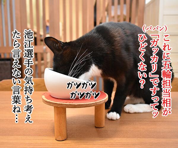 五輪相の『ガッカリ』発言に批判殺到なのッ 猫の写真で4コマ漫画 2コマ目ッ