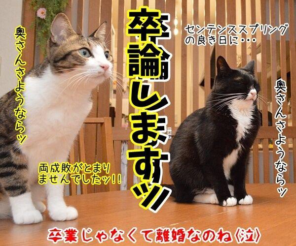 門出の言葉「僕たち、わたしたちは……」 猫の写真で4コマ漫画 4コマ目ッ