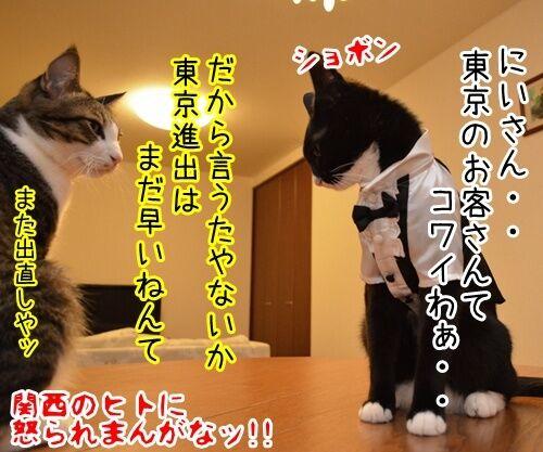 やねんけど 猫の写真で4コマ漫画 4コマ目ッ