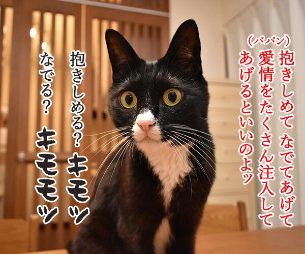 動物が弱っている時はたくさん愛情を注入してあげるといいのよッ 猫の写真で4コマ漫画 2コマ目ッ