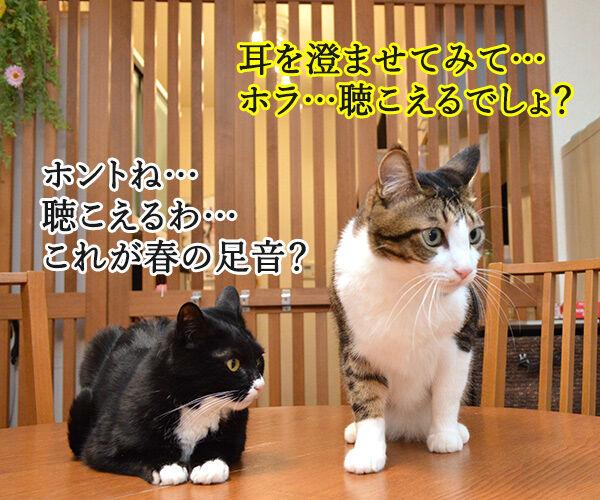 春一番が吹くと『春の足音』が聴こえるのッ 猫の写真で4コマ漫画 3コマ目ッ