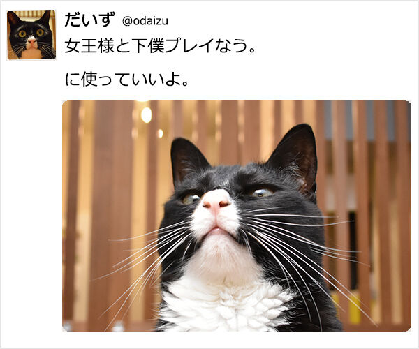 『~なう。に使っていいよ。』ってやってみたのッ 猫の写真で4コマ漫画 2コマ目ッ
