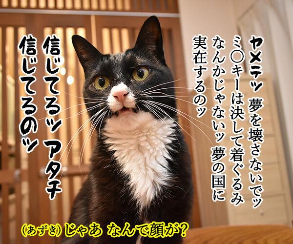 今日は東京ディ〇ニーランドが開園した日なんですってッ 猫の写真で4コマ漫画 3コマ目ッ