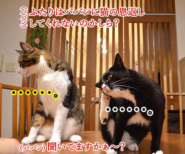 ジブリの猫の恩返しって知ってる? 猫の写真で4コマ漫画 2コマ目ッ