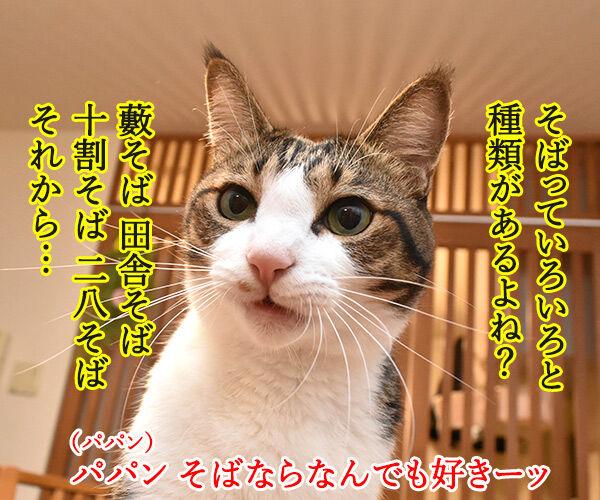 そば職人にアタチなるッ 猫の写真で4コマ漫画 2コマ目ッ