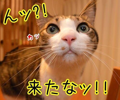 来たなッ 猫の写真で4コマ漫画 1コマ目ッ