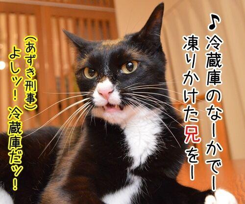 家に帰ろう 猫の写真で4コマ漫画 3コマ目ッ