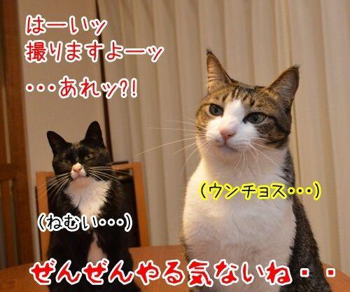 お写真撮りますッ 猫の写真で4コマ漫画 4コマ目ッ