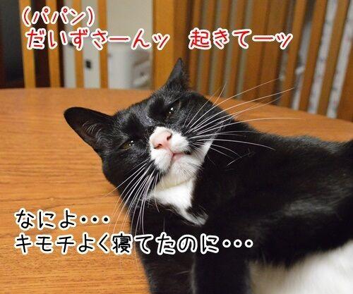 お写真撮りますッ 猫の写真で4コマ漫画 1コマ目ッ