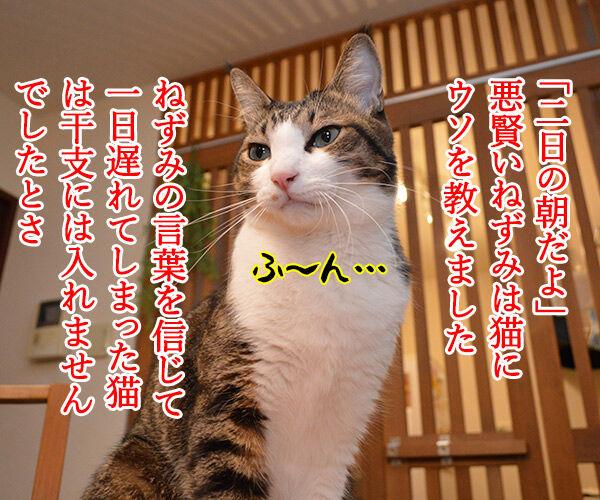 干支に猫がいないワケ 猫の写真で4コマ漫画 2コマ目ッ
