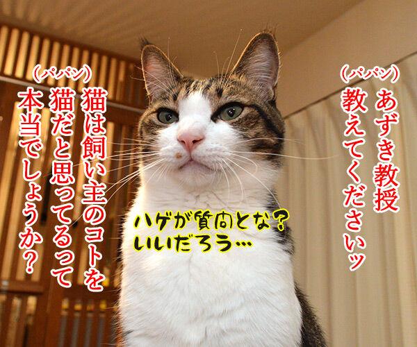 ネコは飼い主をネコと思っている? 猫の写真で4コマ漫画 1コマ目ッ