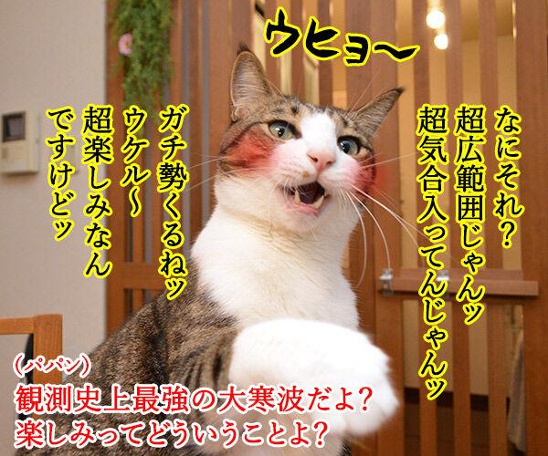 観測史上最強クラスの寒波なのッ 猫の写真で4コマ漫画 3コマ目ッ