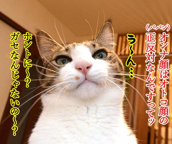 猫のオスとメスを見分けるコツ 猫の写真で4コマ漫画 2コマ目ッ