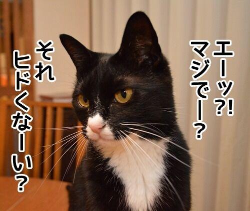 認めないオンナ 猫の写真で4コマ漫画 1コマ目ッ