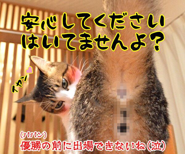 『R-1ぐらんぷり』に出たいのよッ 猫の写真で4コマ漫画 4コマ目ッ