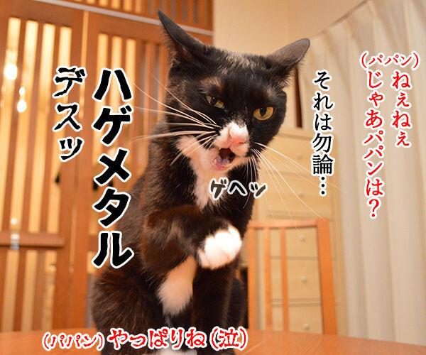 BABYMETALが紅白歌合戦に初出場なんですってッ 猫の写真で4コマ漫画 4コマ目ッ