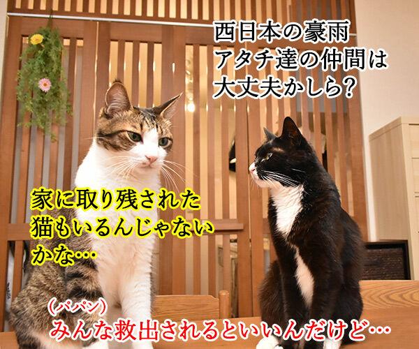 パニック状態のにゃんこにはアレを使うのよッ 猫の写真で4コマ漫画 1コマ目ッ