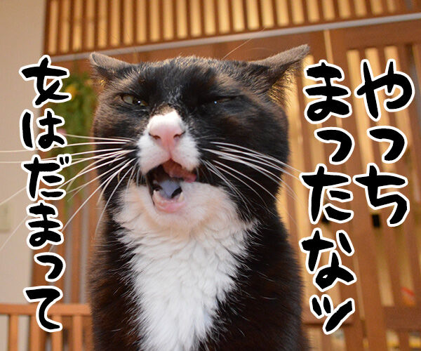 イタい女がいたんですよぉ~ 猫の写真で4コマ漫画 3コマ目ッ