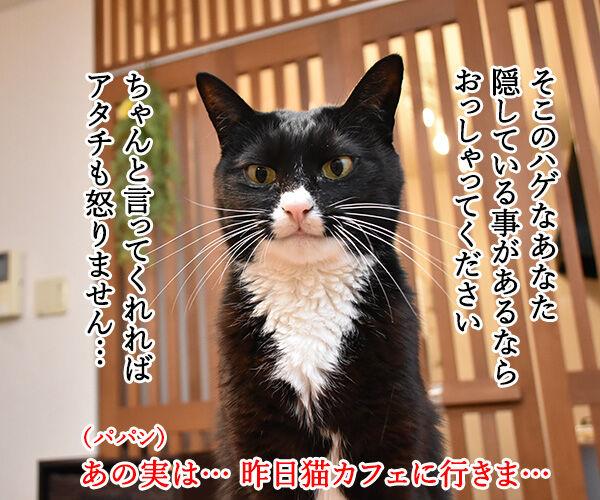 今週のコンプライアンス標語はこれなのよッ 猫の写真で4コマ漫画 2コマ目ッ