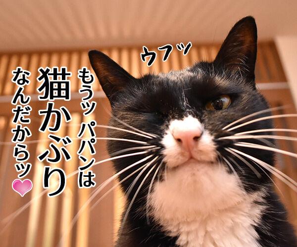 パパンて会社にいる時はどんな感じ? 猫の写真で4コマ漫画 3コマ目ッ