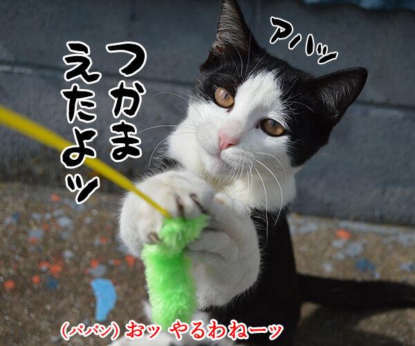 猫島 其の六 猫の写真で4コマ漫画 3コマ目ッ