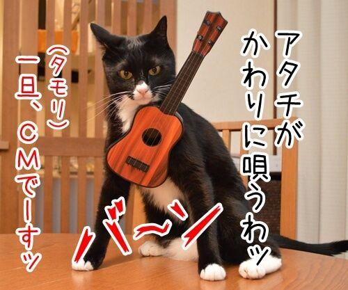 ドタキャン 猫の写真で4コマ漫画 4コマ目ッ