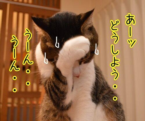 ドタキャン 猫の写真で4コマ漫画 3コマ目ッ
