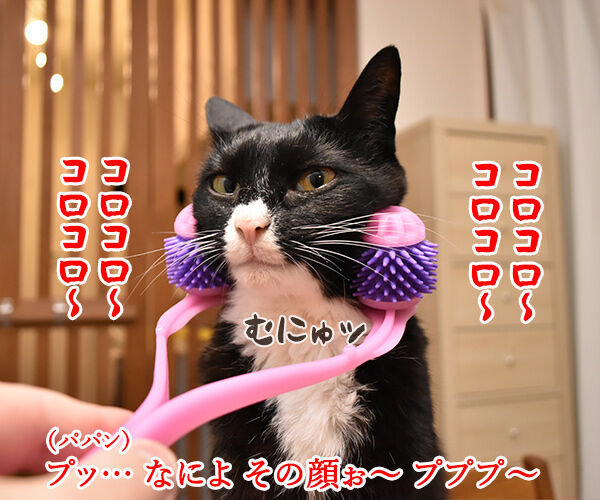 『全身マッサー術 にゃんこの癒し』で癒しちゃうわよッ 猫の写真で4コマ漫画 2コマ目ッ