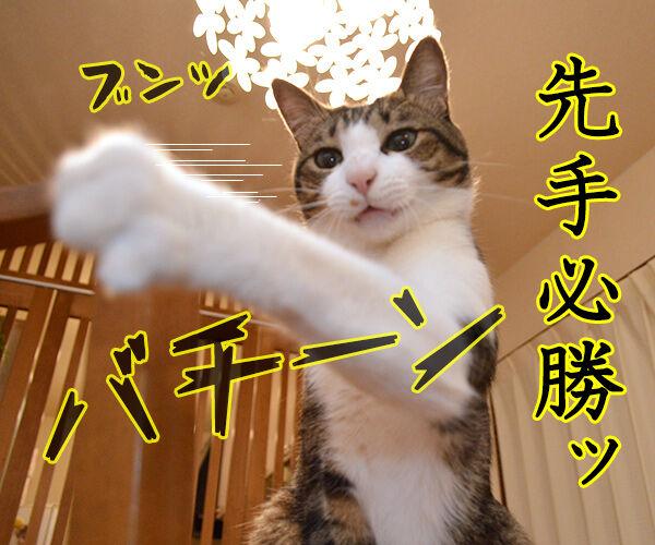 流し目王子の握手会 猫の写真で4コマ漫画 3コマ目ッ