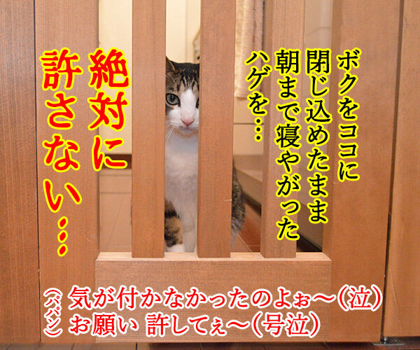 虐待は許さないッ 猫の写真で4コマ漫画 4コマ目ッ