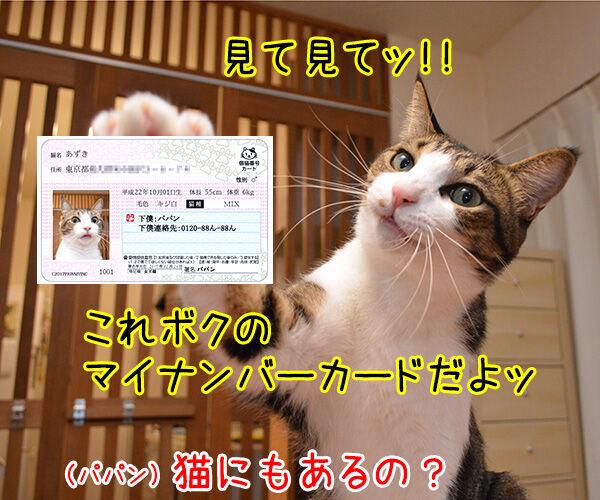 マイナンバーカード 持ってる? 猫の写真で4コマ漫画 3コマ目ッ