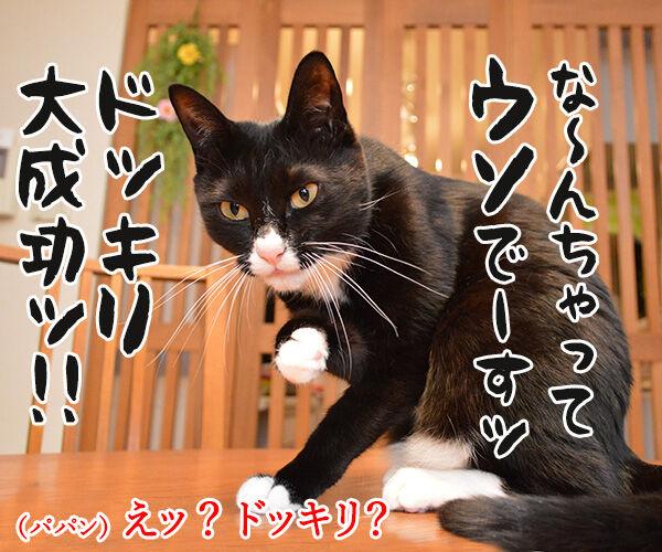 カラダがだるいの 猫の写真で4コマ漫画 3コマ目ッ