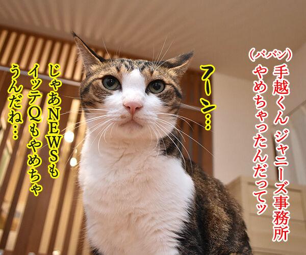 手越くんがジャニーズ事務所をやめちゃったのよッ 猫の写真で4コマ漫画 2コマ目ッ